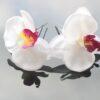 Haarpin Met Grote Orchidee Van Zijde 65mm Kleur Wit Met Paars EBH033